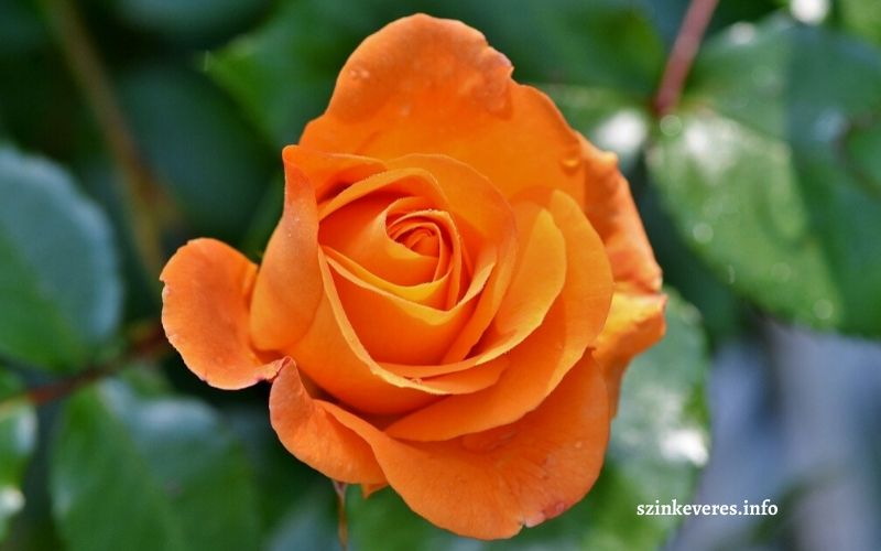 Színkeverés narancssárga